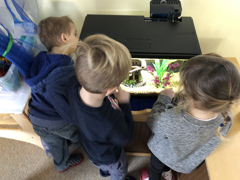Children observing fish tank together.