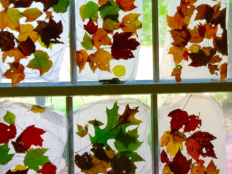 Pressed leaves in the window.